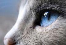 Dej mi něco s kočičkou/ Give Me Something with Cats / Vše s kočkami, kočičkami a koťátky. / Everything with cats, kittens and tomcats.