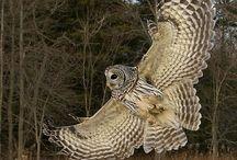 Owls - AP Studio Design project