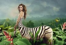 Zebraur ● Female