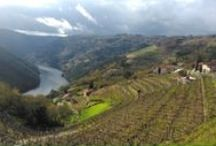 Guided tours Ribeira Sacra / Tours in this fantastic area of Galicia. Impresive monasteries located in the gorges and valleys of Sil river. Vineyards cultivated on terraces hanging out of the steep riverside. One of our favourite routes.