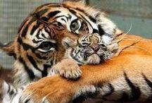 Amazing animals / beautiful animals