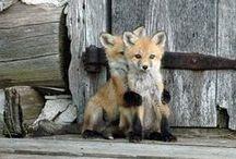 *~* amazing animals *~*