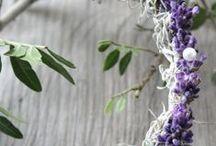 ~lavender~dreams~