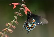 Beautiful Butterflies and Moths / by Angela Pirie