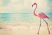 Coral, Flamingo / Aqua, Turquoises