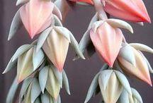 Details ~ Flora