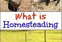 Homesteading with The Flip Flop Barnyard and Friends / All things homesteading! Give us your best homesteading, farming, livestock (chickens, turkeys, poultry, goat, cow, pig, rabbits, sheep, and anything else), gardening, self sufficient living, and anything I left out that fits the bill. Pinners: Share up to 3 pins per day. Try to spread duplicate content out. Feel free to add quality content from others as well. Please share from this board as well. Happy Pinning! (If you would like to contribute to this board please message me)