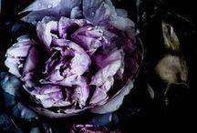 Details ~ Winter Florals