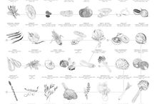 G&G | The Chart / Seasonal Vegetable Chart