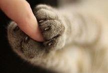 Pets - little love ♥