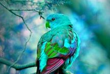 Kuş yuvam