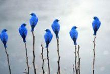 Blau- blue