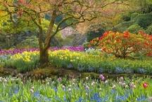 Garden ~ Paradisus ~ Záhrada / A Place to Dream