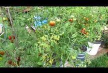 Vegetable gardening / by Cheryl Rose