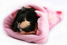 Products for pampered guineas! / Guinea pig and rabbit themed products!