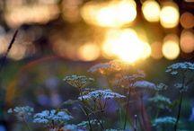 Seasons&nature
