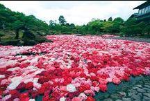 Kukkafestivaalit / Flower festivals / Mielenkiintoisia kukkafestivaaleja ympäri maailman / Interestting flower festival all around the world