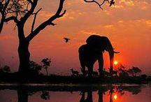 myafricaheart