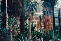 My secret garden / plantas, flores que inspiran y relajan