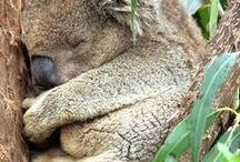 Sleeping Babies - just how we like them / Beautiful Sleeping Babies