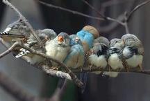 Pássaros: Uma paixão!