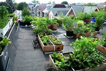 Urban Garden | Roof-top Vegetable Gardens / by Johanne Daoust