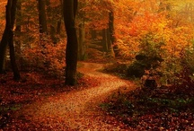 """Fall Into Autumn Memories / """"Autumn is a second spring when every leaf is a flower""""  If you follow me and would like to be invited to share on this  board,, leave a message on one of my pins... NO INVITES & Please stick to topic..."""