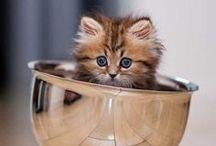 Cute animals / by Kay Goldman