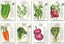 Vegetable Gardening / Assorted Vegetables and types of Veggy Gardens