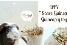 Guineapig DIY / A board filled with cute and crafty DIY projects for you and your guinea pig.