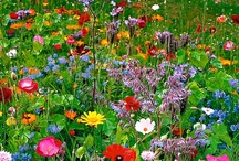 Gardens & Flowers / by Janet Romano