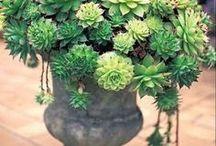 Garden Greats / by Heather Sorensen