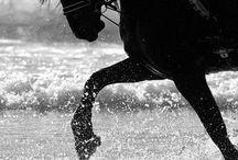 H O R S E S / Horses black & white / by Rowena Gässler