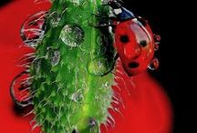 Bees, Ladybugs and friends / by Heather Sorensen