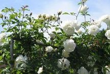 GARDENING / #green #nature #flowers #trees