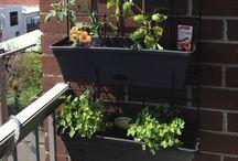 Gardening & Balcony Ideas