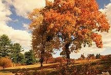 Rainbow Road: Where to find fresh fall colors! / Hop in your car and make a day out of experiencing all of Massachusetts' beautiful foliage. What are you waiting for? / by Visit Massachusetts