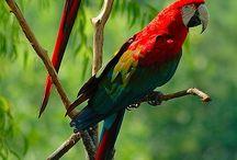 Beauty wild... / ...pruebas de que existe un Creador del Universo y de que la tierra fue diseñada para ser un paraíso! :D