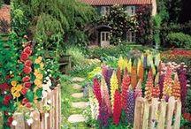 Flower Gardens / Flowers, gardens, white gardens, flower gardening, gardening, English Gardens, lavendar