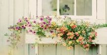 Simply gardening and plants