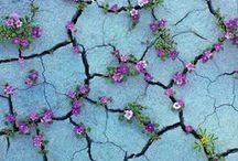 Flowers / Inspirations et idées DIY pour fleurir votre intérieur..