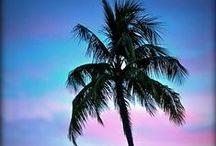 Island Hopping / by Bahama Breeze