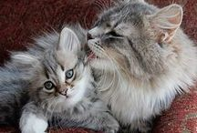 Animals: All Things Cat / All about cats - cute cats, looking after your cat and getting to know your cat