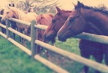 konie / o koniach