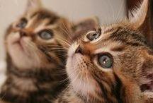 koty / o kotach małych i durzych