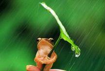 dzikie,słodkie i małe zwierzęta / dzikie,słodkie,małe zwierzęta takie właśnie są