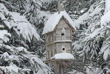 Fuglehus og fuglebrett