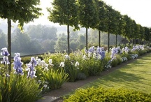 collection / landscaping / Our inspiration > Chadwick Dryer Clarke studio