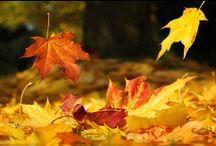 falling leaves / by Mrs. Kringle