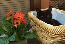 Pets and Baskets
